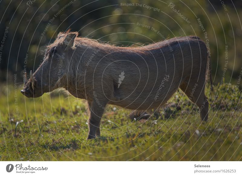 Nature Vacation & Travel Summer Animal Environment Meadow Natural Grass Tourism Wild animal Trip Observe Beautiful weather Animal face Safari Love of animals