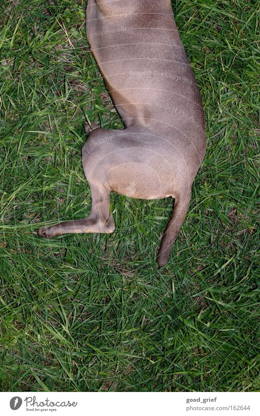 Meadow Dog Grass Pelt Part Dresden Division Paw Mammal Tails Elbe