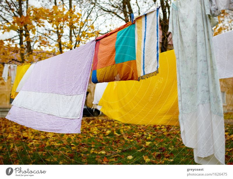 Bright colorful linen Garden Landscape Autumn Park Cloth Blue Yellow Red Colour yard Backyard background Consistency dry Material cell cellule real life johvi