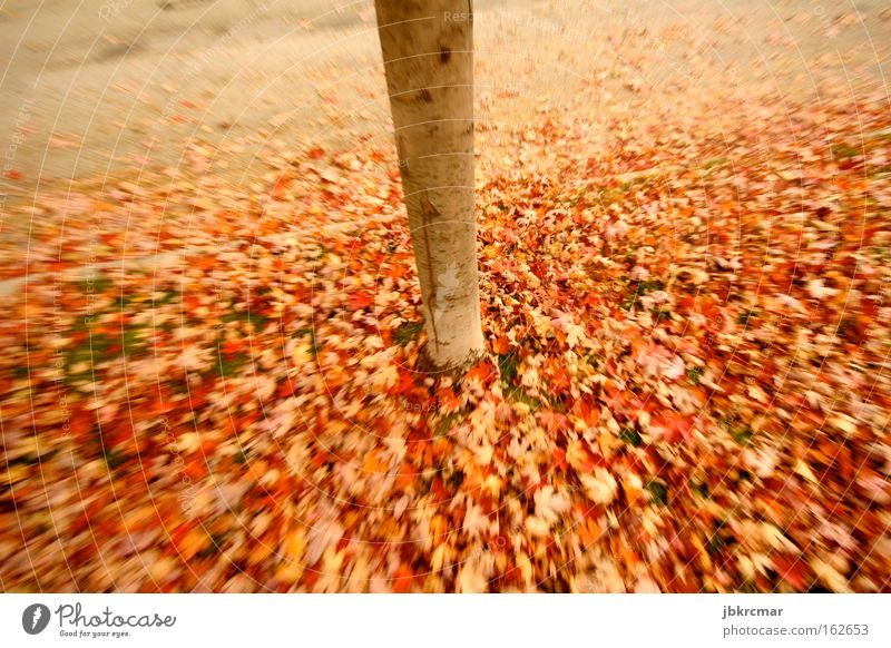 Autumn leaves Nature Leaf Multicoloured Tree Red Tree trunk Romance Sidewalk Poetic heap of leaves Sadness