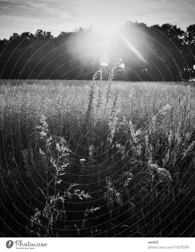 b/w | Forest and meadow photo Environment Nature Landscape Plant Sky Climate Beautiful weather Tree Grass Bushes Agricultural crop Wild plant Meadow Field