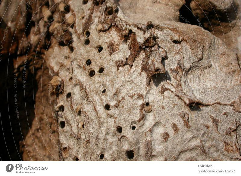 termite work Wood Tree Tree bark Hollow termites