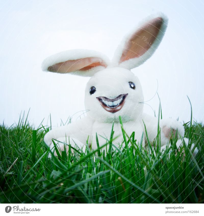 Freaky rabbit Hare & Rabbit & Bunny Easter Crazy Lawn Grass Nest Easter egg Laughter Ear Joy freaky Easter Bunny