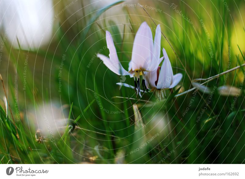 Nature Beautiful White Flower Green Plant Blossom Grass Spring Growth Blossoming Botany Blossom leave Pistil