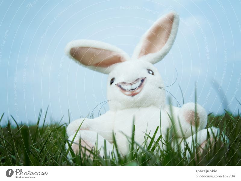 Joy Grass Laughter Crazy Lawn Ear Easter Hare & Rabbit & Bunny Nest Easter egg