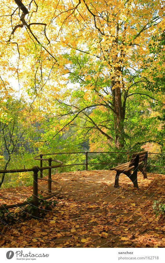 Tree Leaf Forest Relaxation Autumn Park Bench
