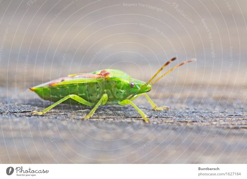 Nature Green Animal Environment Brown Insect Beetle Disgust Bug Articulate animals Hexapod