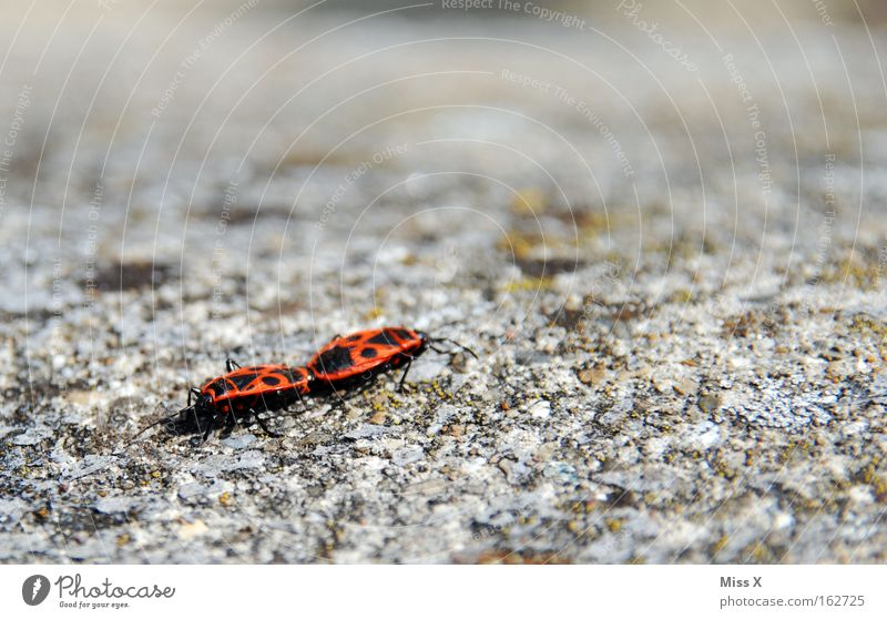Wall (building) Wall (barrier) Stone Insect Beetle Spring fever Firebug