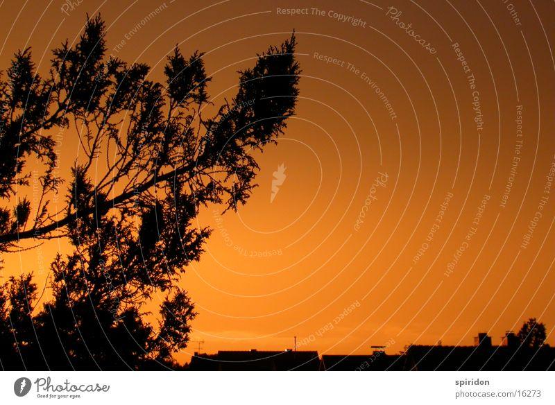 Inner Mounting Flame Tree Twig Orange Evening Sun Gold