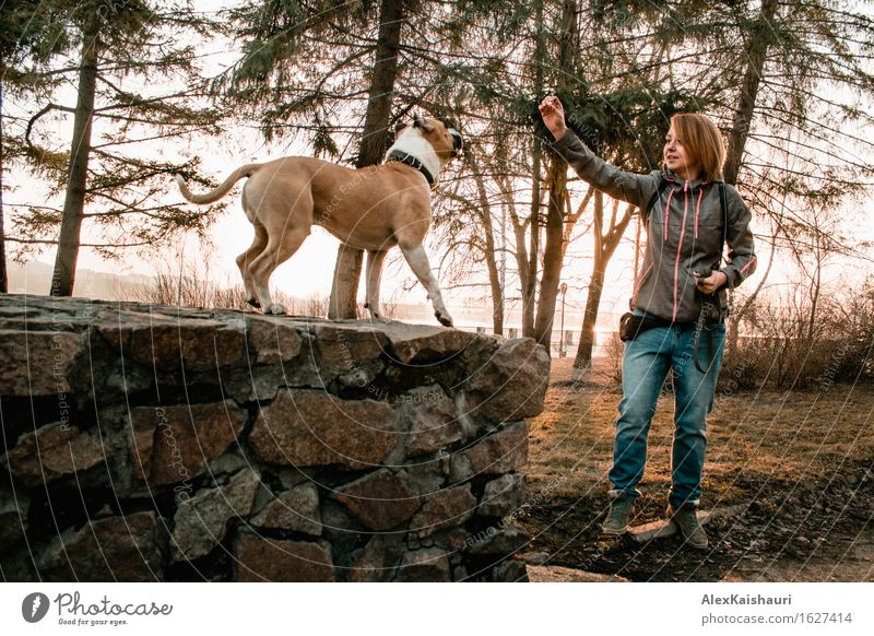 Young woman is training her dog in the evening park. Human being Dog Nature Vacation & Travel Youth (Young adults) Summer Tree Animal Joy 18 - 30 years Adults