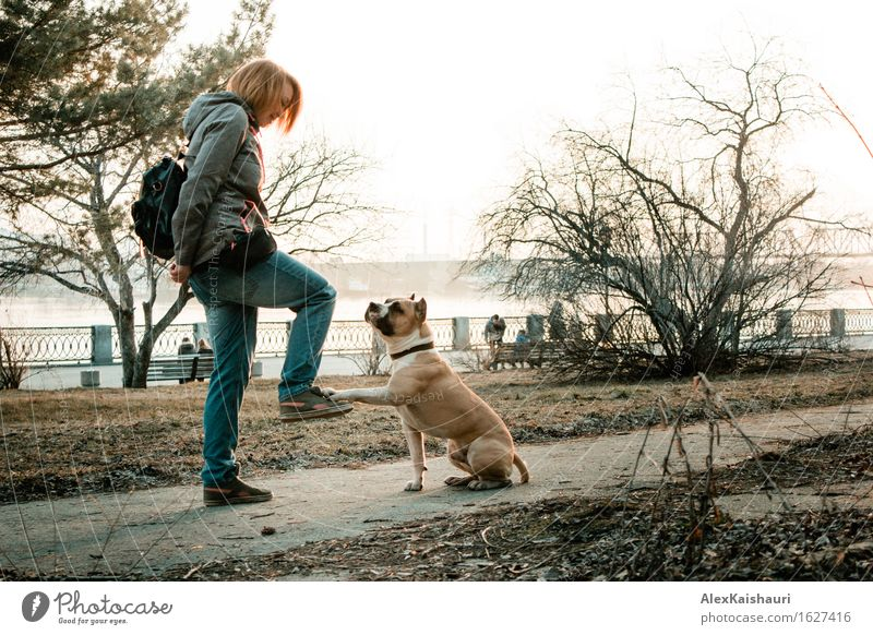 Young woman is training her dog in the evening park. Human being Woman Dog Nature Vacation & Travel Youth (Young adults) Summer Sun Landscape Animal Joy