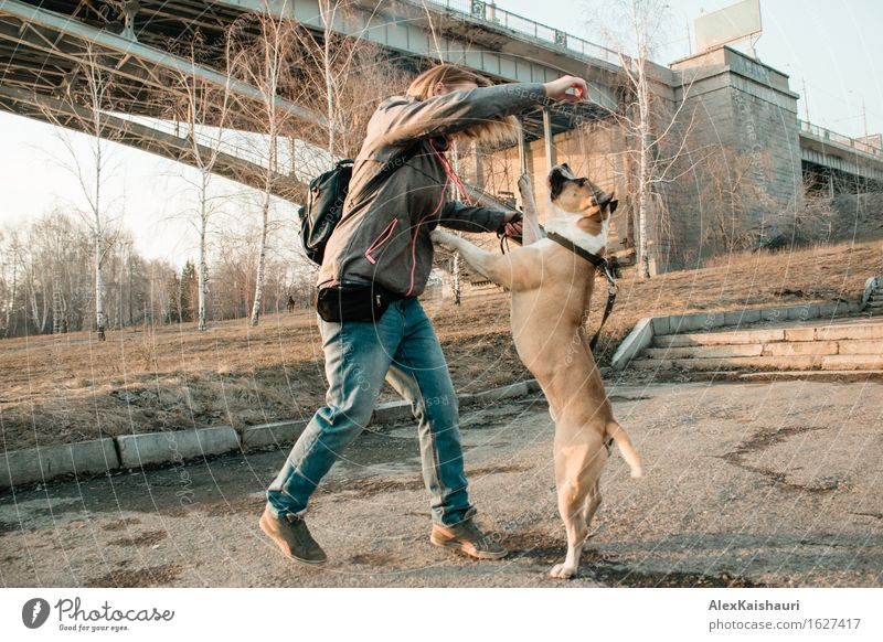 Young woman is training her dog in the evening park. Human being Dog Nature Vacation & Travel Youth (Young adults) Summer Tree Animal 18 - 30 years Adults