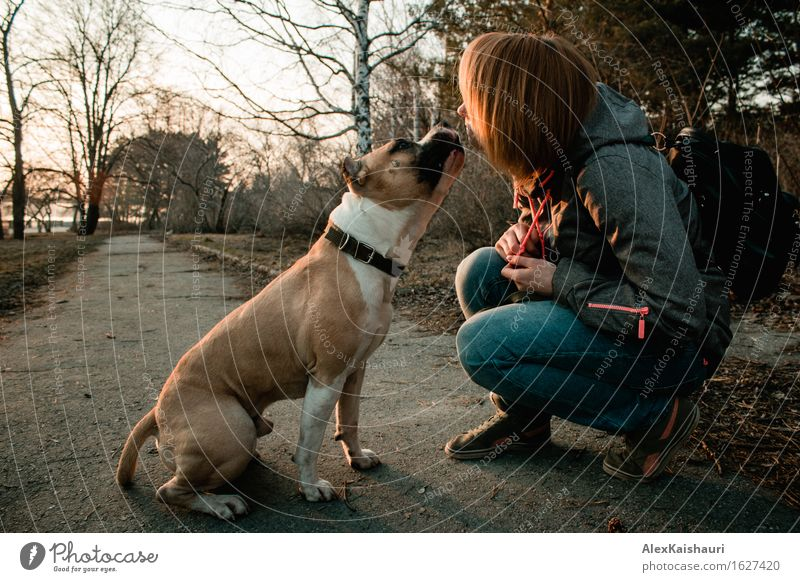 Young woman is showing love to her dog in the evening park. Human being Dog Nature Vacation & Travel Youth (Young adults) Summer Tree Animal 18 - 30 years