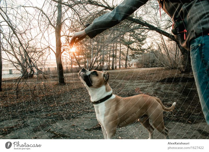 Young woman is playing with her dog in the evening park. Human being Dog Nature Vacation & Travel Youth (Young adults) City Summer Sun Tree Animal Joy