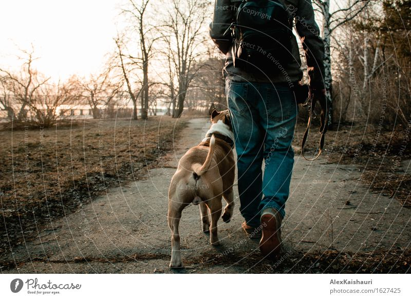 Young woman is walking with her dog in the evening park. Human being Dog Nature Vacation & Travel Youth (Young adults) Summer Sun Tree Animal 18 - 30 years