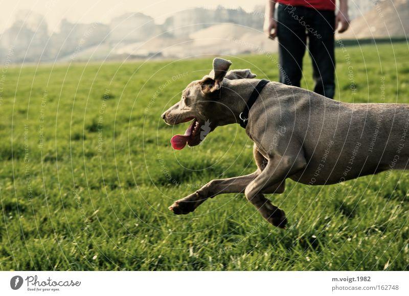 Summer Joy Meadow Grass Dog Running Speed Leisure and hobbies Dynamics Beautiful weather Elapse Walk the dog