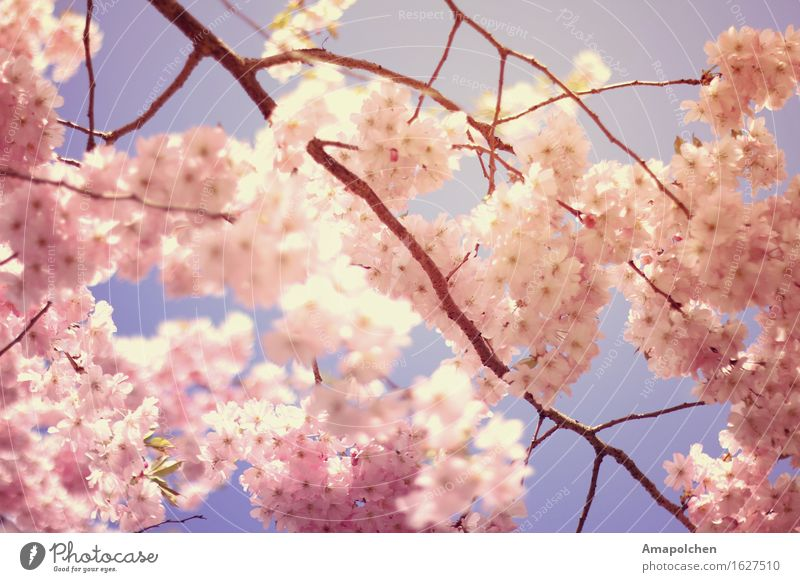 Nature Plant Summer Sun Tree Flower Relaxation Leaf Animal Environment Life Love Spring Blossom Healthy Garden