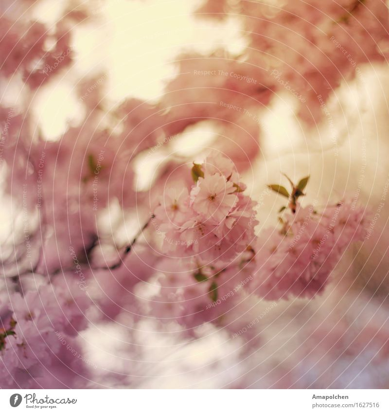 Nature Plant Summer Tree Flower Relaxation Calm Life Spring Blossom Garden Park Contentment Weather Esthetic Climate