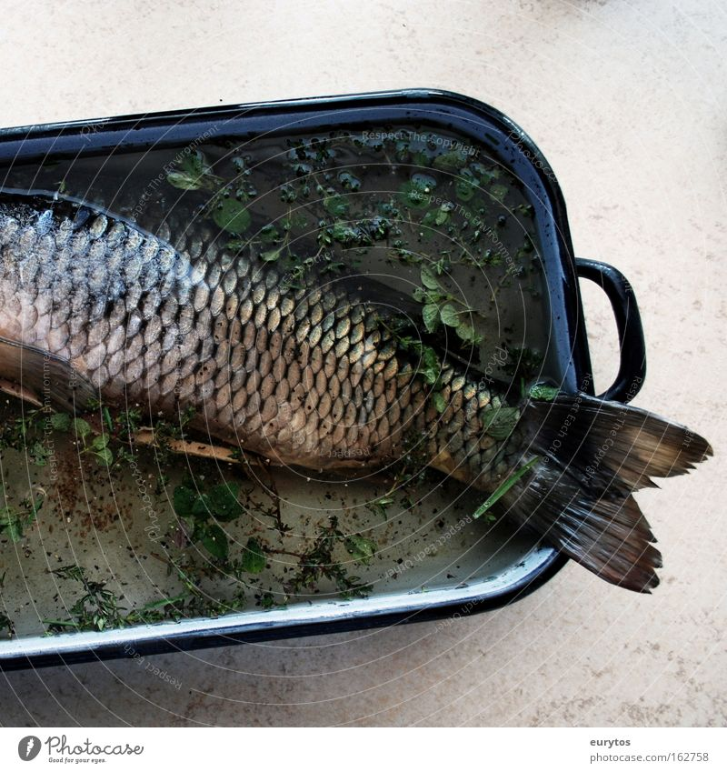 Fish on Good Friday Nutrition Pan Gray Green Carp Cooking Colour photo Interior shot Close-up Copy Space right Copy Space bottom Deserted Headless