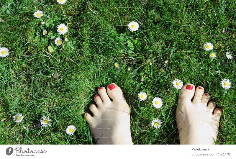 White Green Red Summer Joy Emotions Grass Spring Feet Lie Daisy Toes Barefoot 10 Varnish Titillation