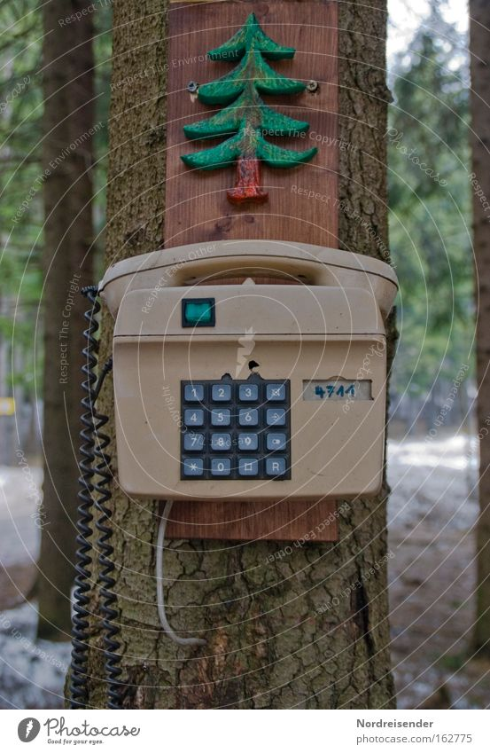 Nature Old Tree Joy Winter Forest Wood Exceptional Success Crazy Telecommunications Telephone Idea Plastic Listening Information Technology