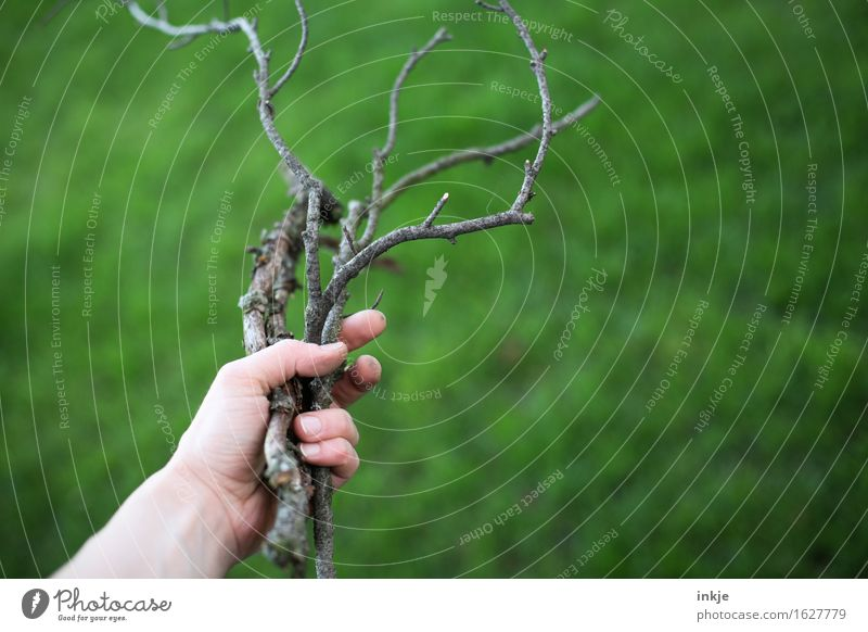 Nature Green Summer Hand Grass Wood Garden Branch To hold on Dry Accumulate Twigs and branches Firewood