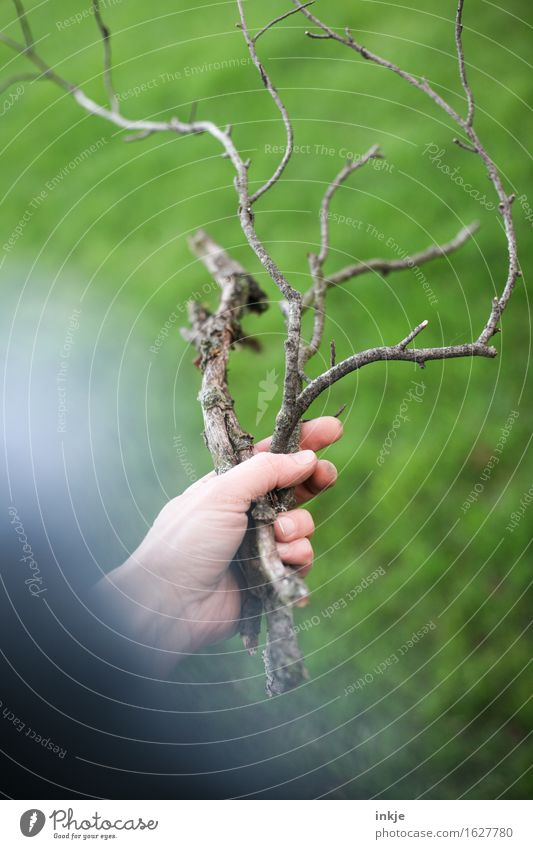 Branches with a lot of fuzziness Hand Nature Summer Grass Wood Garden To hold on Thin Long Dry Green Accumulate Colour photo Exterior shot Close-up Day Light