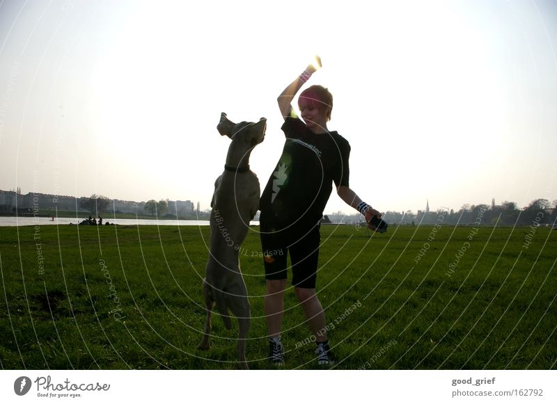 Woman Dog Sun Joy Meadow Grass Jump Dresden Fitness Mammal Elbe Saxony Elbufer