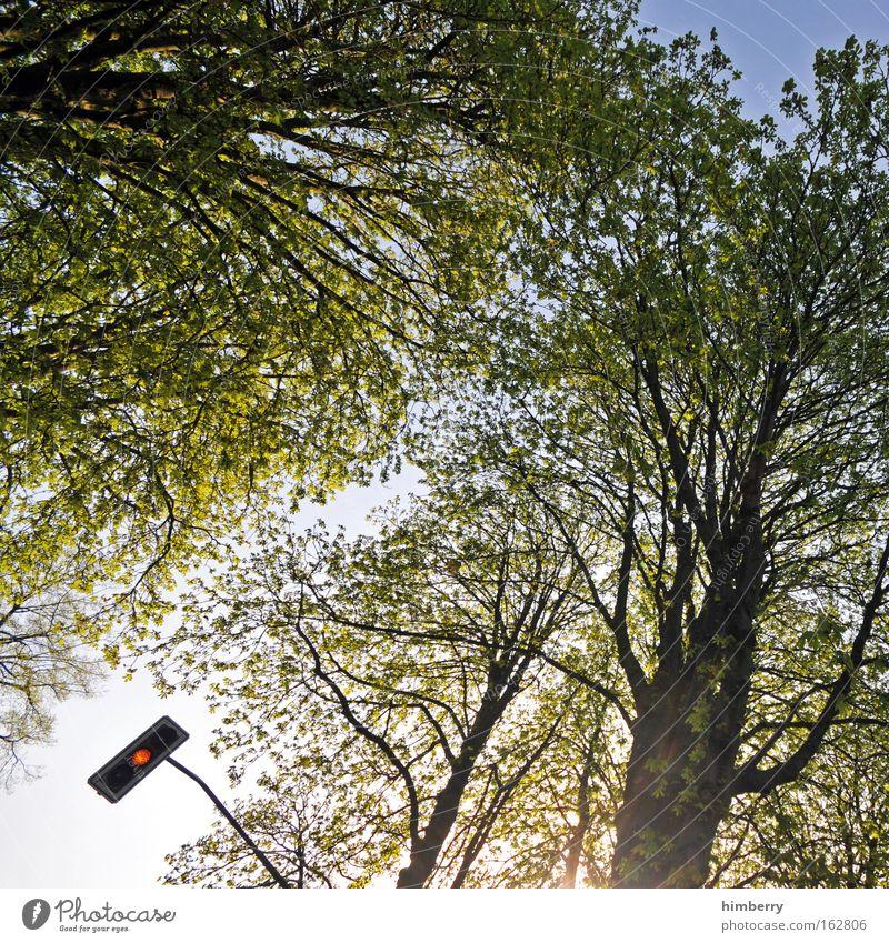 Nature Tree Summer Yellow Spring Road traffic Design Beginning Transport Lifestyle Growth Technology Change Curiosity Seasons Beautiful weather