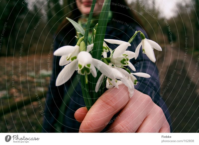 Woman Nature Green Plant Flower Joy Spring Laughter Gift Desire Smiling Bouquet Thank you very much Congratulations Snowdrop Apology