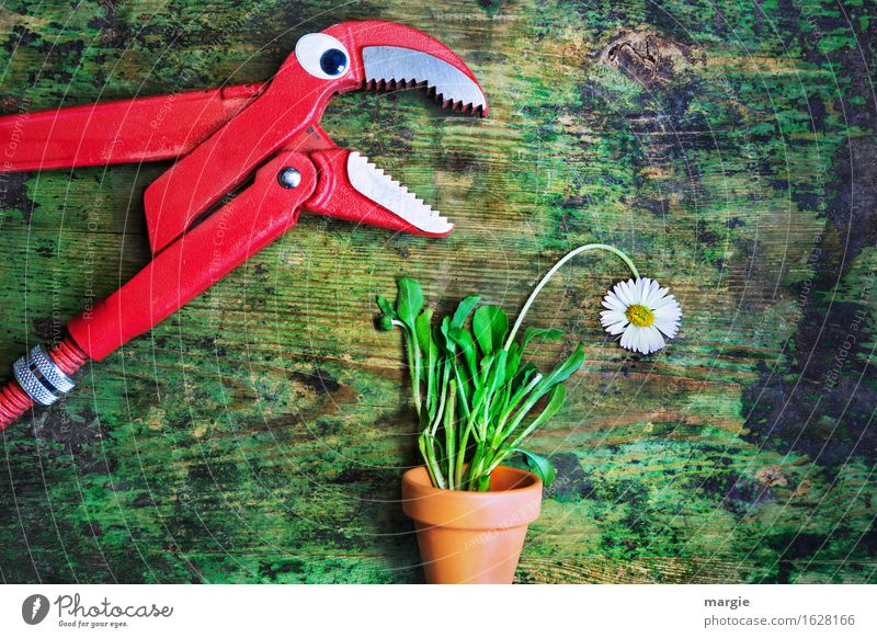 """A pair of pliers with eyes is talking to a daisy in a flowerpot. Work and employment Craftsperson Gardening Workplace Agriculture Forestry Plant Flower"