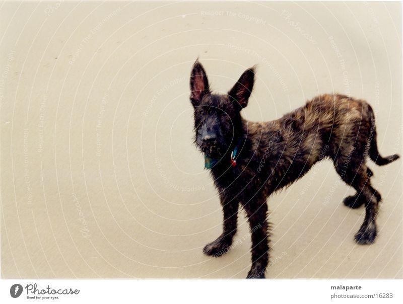 Dog_01.jpg Beach Transport pepe four-legged friends big ears