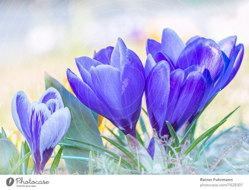 Nature Plant Beautiful Environment Spring Meadow Park Joie de vivre (Vitality) Anticipation Sympathy