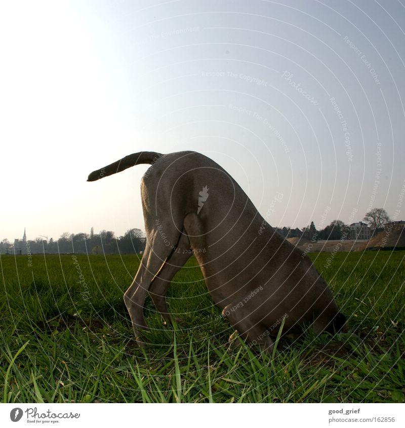 [DD|Apr|09] Headless Dog Tails Meadow Grass Blade of grass Elbe Dresden Sun Light Pelt Joy Mammal Put your head in the sand. tia user meeting