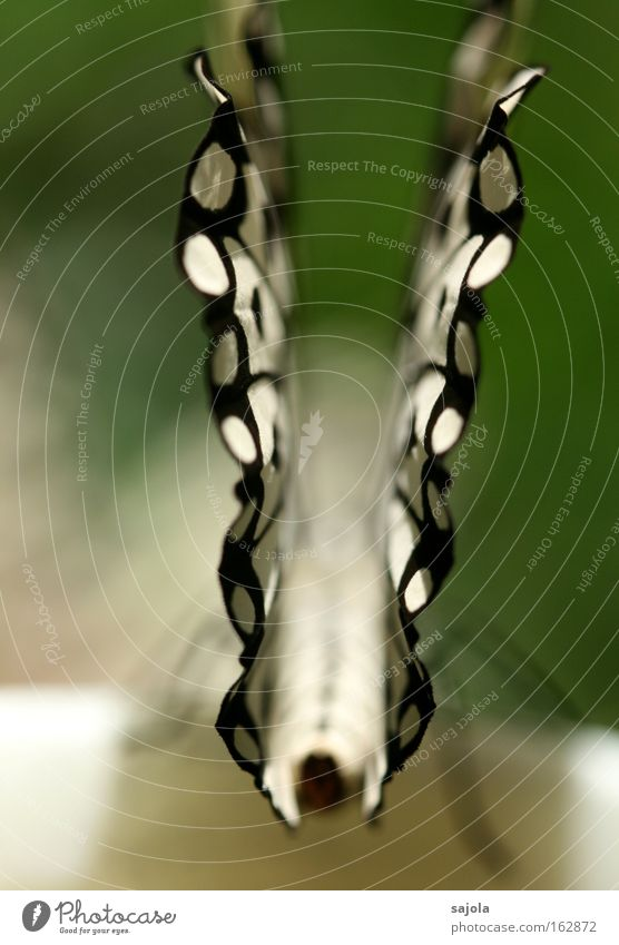 Beautiful White Macro (Extreme close-up) Black Animal Esthetic Wing Insect Delicate Butterfly Fragile Portrait format
