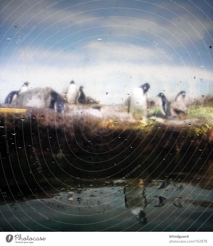 Nature Water Winter Animal Window Sadness Bird Art Glass Stand Culture Zoo Captured Placed Penguin