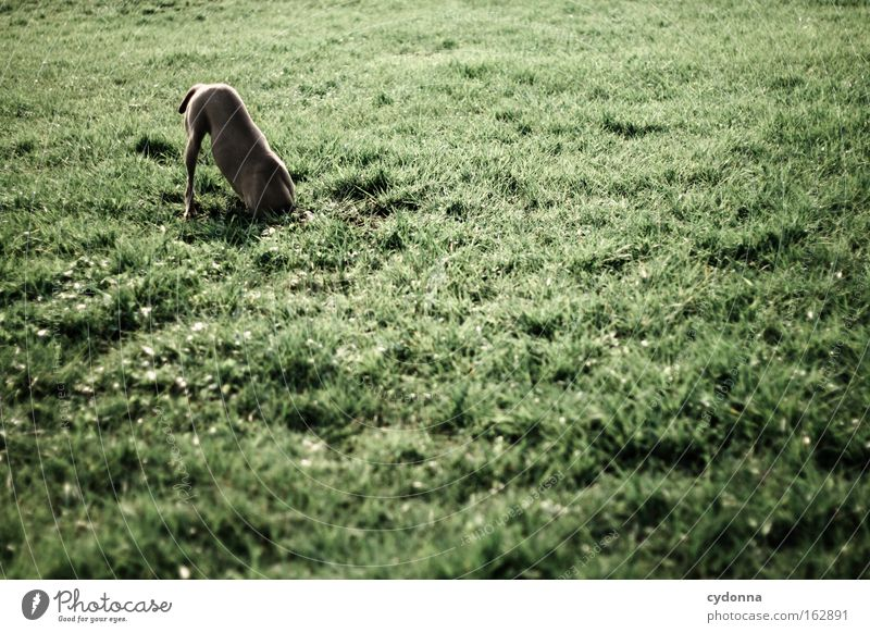 Animal Meadow Grass Spring Dog Contentment Power Nose Search Discover Odor Mammal Find Intuition Headless Dig