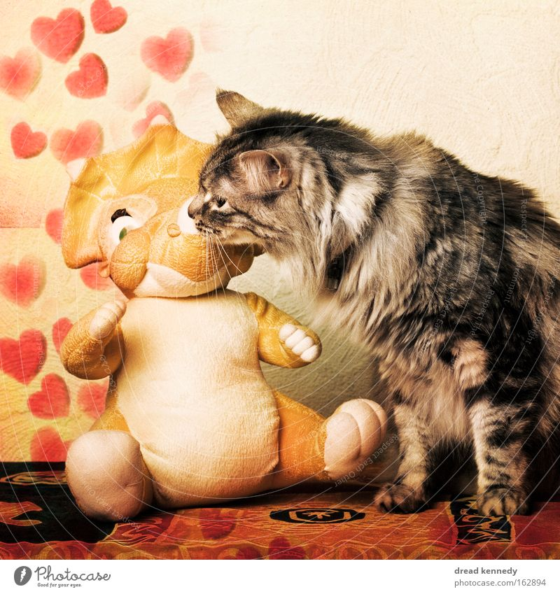 Cat Love Playing Happy Funny Together Heart Cute Romance Communicate Pelt Touch Toys Kissing Passion Symbols and metaphors