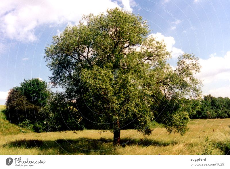 tree_2 Meadow Field tree alone Nature Free