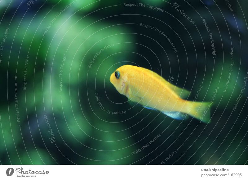 Water Green Yellow Swimming & Bathing Glass Fish Dive Zoo Underwater photo Aquarium Basin Algae Aquatic plant Deep sea Signs of the Zodiac