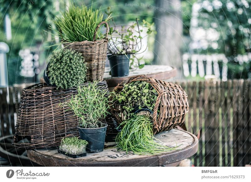 Herb garden in a basket Food Herbs and spices Chives Rosemary Cress Thyme wheatgrass Mint Marjoram Nutrition Organic produce Vegetarian diet Lifestyle Joy Save