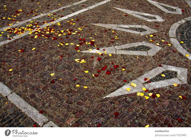 Sun Spring Stone Feasts & Celebrations Birthday Places Rose Traffic infrastructure Blossom leave Paving stone Minerals Mosaic Rose leaves