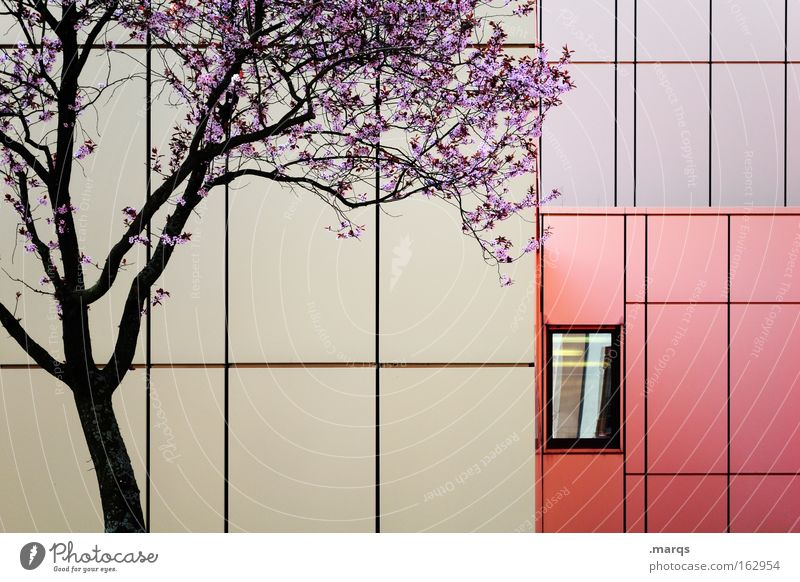 Purple Environment Nature Plant Climate Climate change Tree Blossom Architecture Facade Window Line Blossoming Esthetic Beautiful Violet Red Emotions
