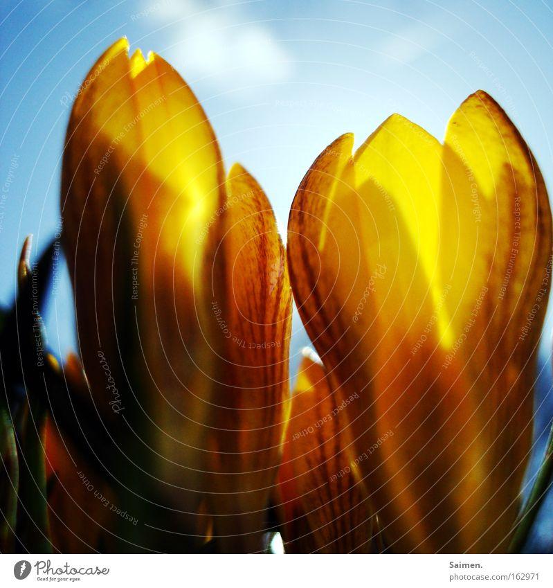 Beautiful Sky Sun Flower Joy Clouds Yellow Life Spring Bright Happiness Beautiful weather Cheerful Crocus Good mood