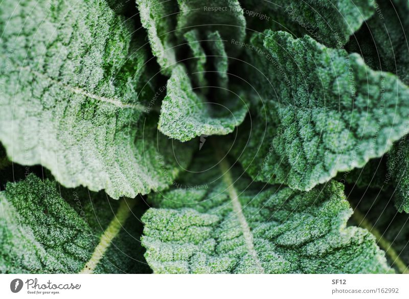 Green Movement Healthy Cooking oil Lettuce Pepper Vegetable Vinegar Old hag