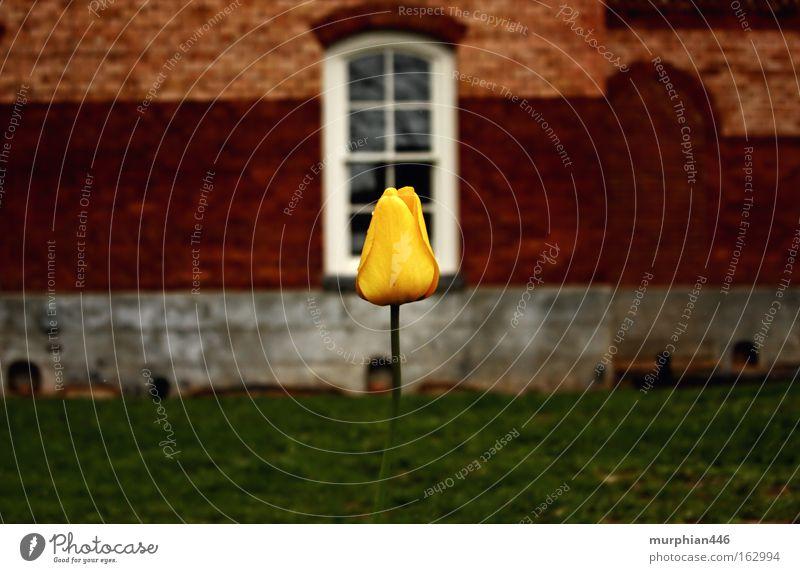 Tulip in Winter Flower Blossom Spring Building Brick Winter flower North Carolina