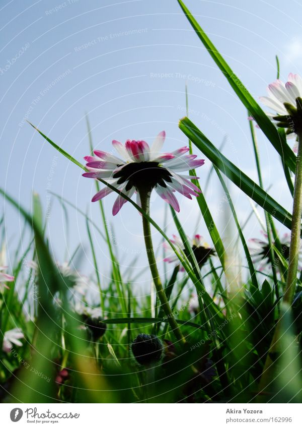When I grow up, I'm gonna... Colour photo Exterior shot Close-up Macro (Extreme close-up) Deserted Day Worm's-eye view Nature Sky Spring Grass Meadow Blue Green