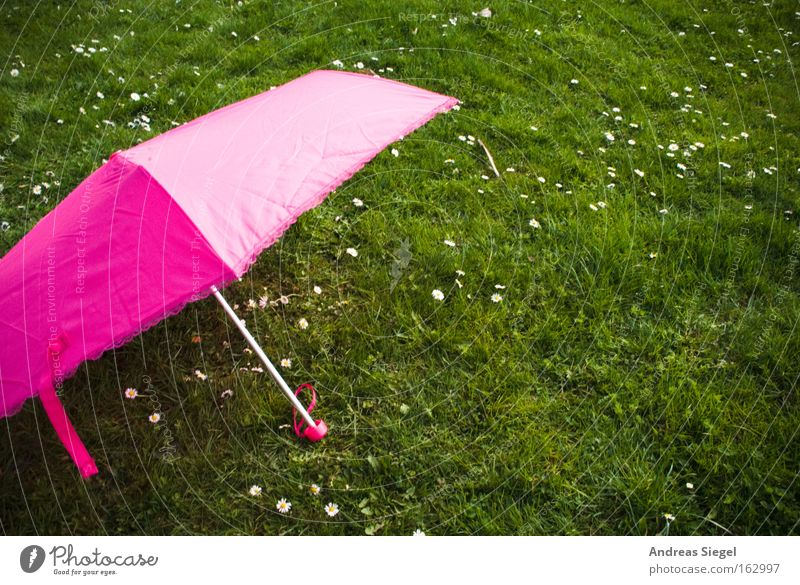 Pink on green. Umbrella Sunshade Meadow Grass Green Summer Spring Ease Daisy Joy Leisure and hobbies