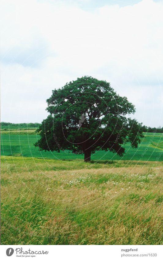 tree_3 Tree Meadow Field