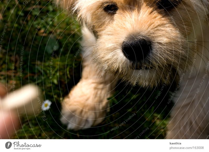 Human being Hand Summer Animal Meadow Playing Dog Wait Nose Fingers Lawn Concentrate Appetite Daisy To feed Mammal